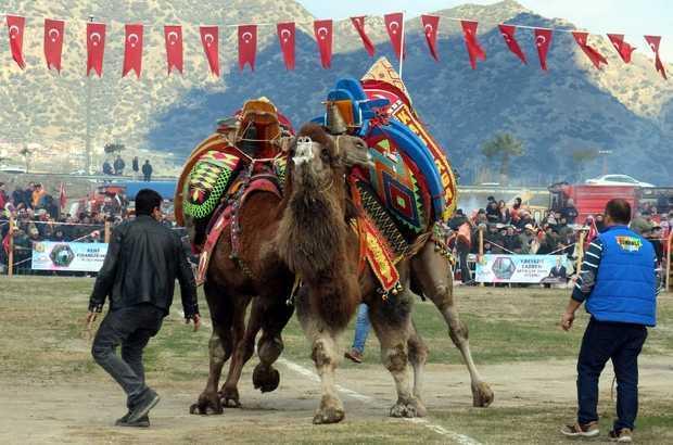 2019'un ilk deve güreşi İncirliova'da yapıldı